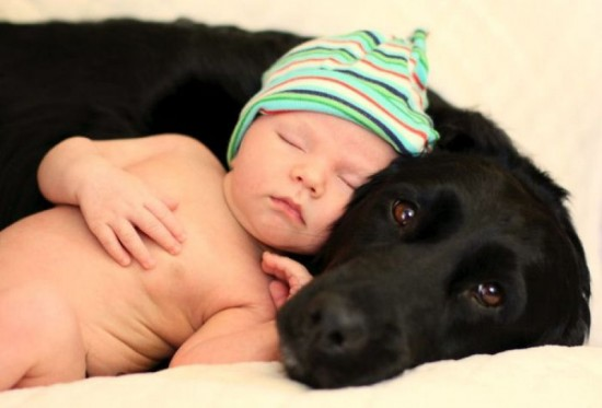 bebes-y-perros-2